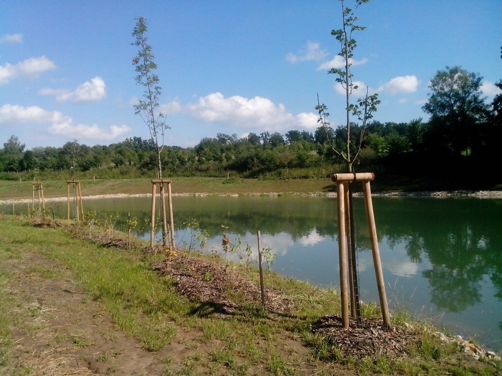 výsadba stromů a keřů u rybníka v Bojkovicích