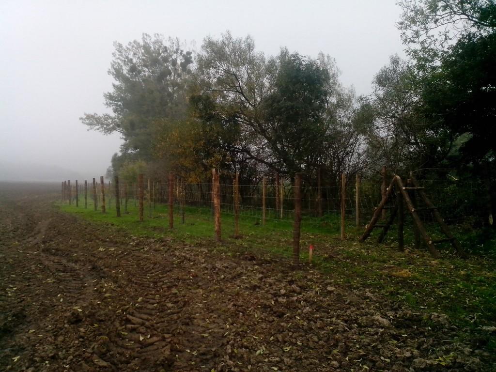výsadba biokoridoru v Holešově