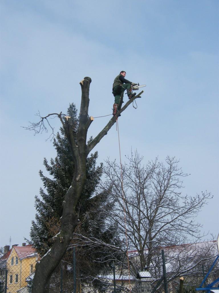 rizikové kácení v Kroměříži
