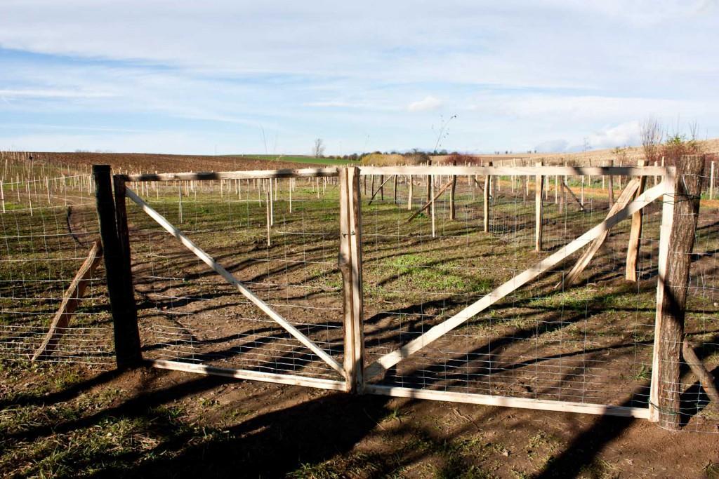 výsadba biocentra v obci Lutopecny