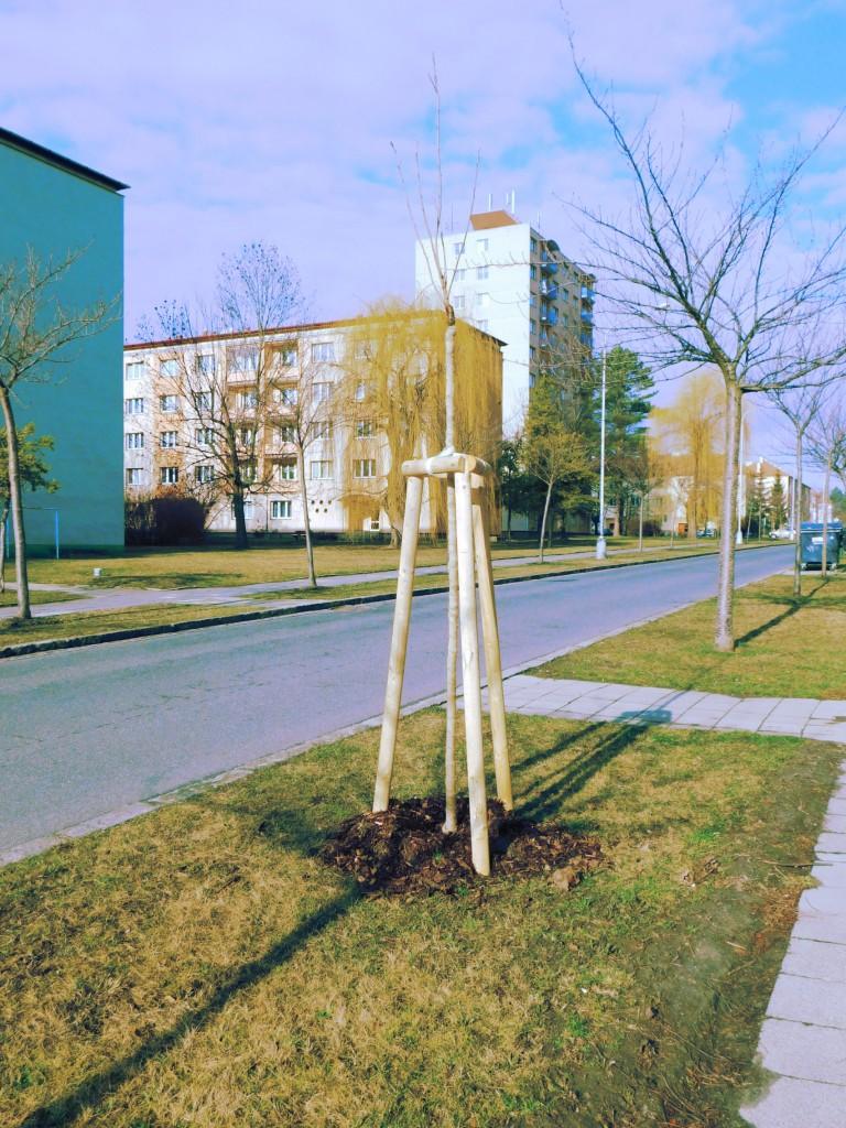 výsadby alejových stromů ve městě Kroměříž