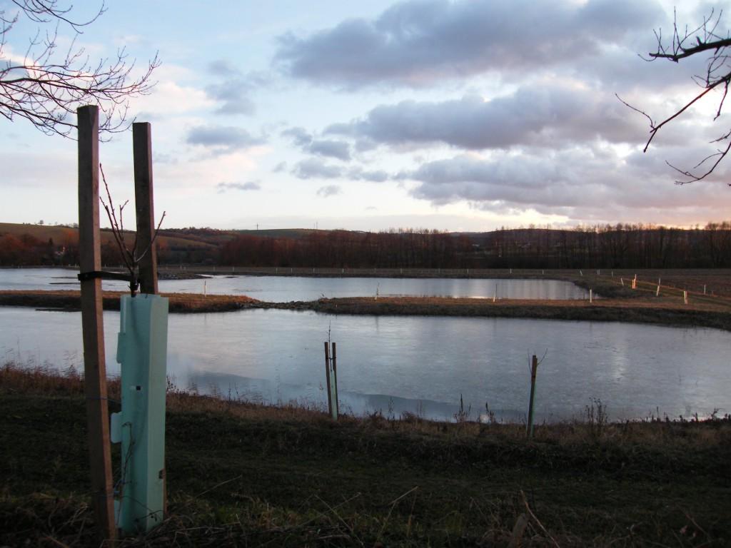 revitalizace náhonu a rybníka s výsadbou dřevin